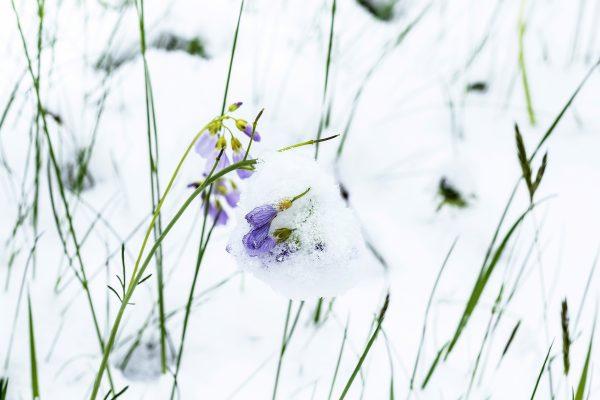 Nature + Ice